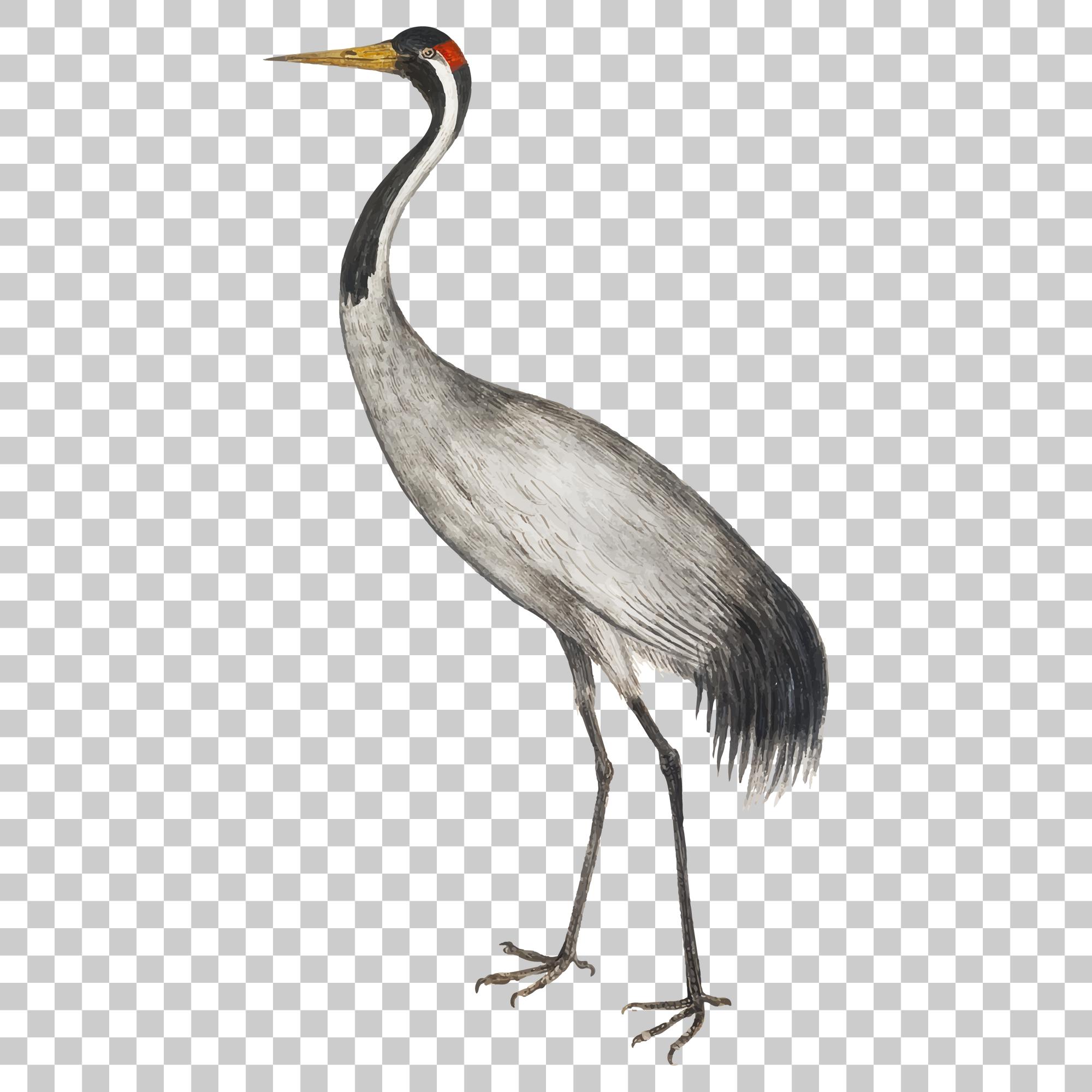 Crane Stork Bird Png Image With Transparent Background Bird Png Images Stork