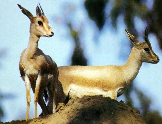 نتيجة بحث الصور عن صور غزلان Animals Social Activities Kangaroo