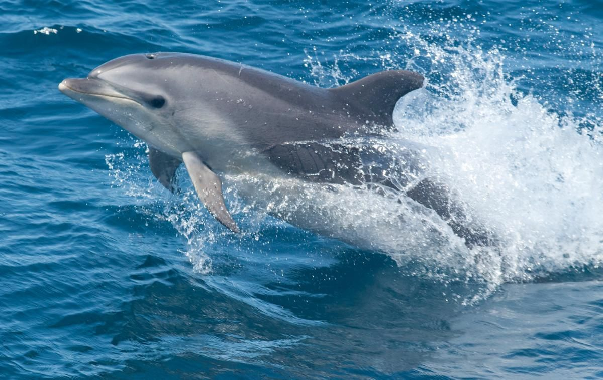 Dolphin Disease Outbreak Shows How To Account For The Unknown When Tracking Epidemics Common Bottlenose Dolphin Bottlenose Dolphin Dolphins