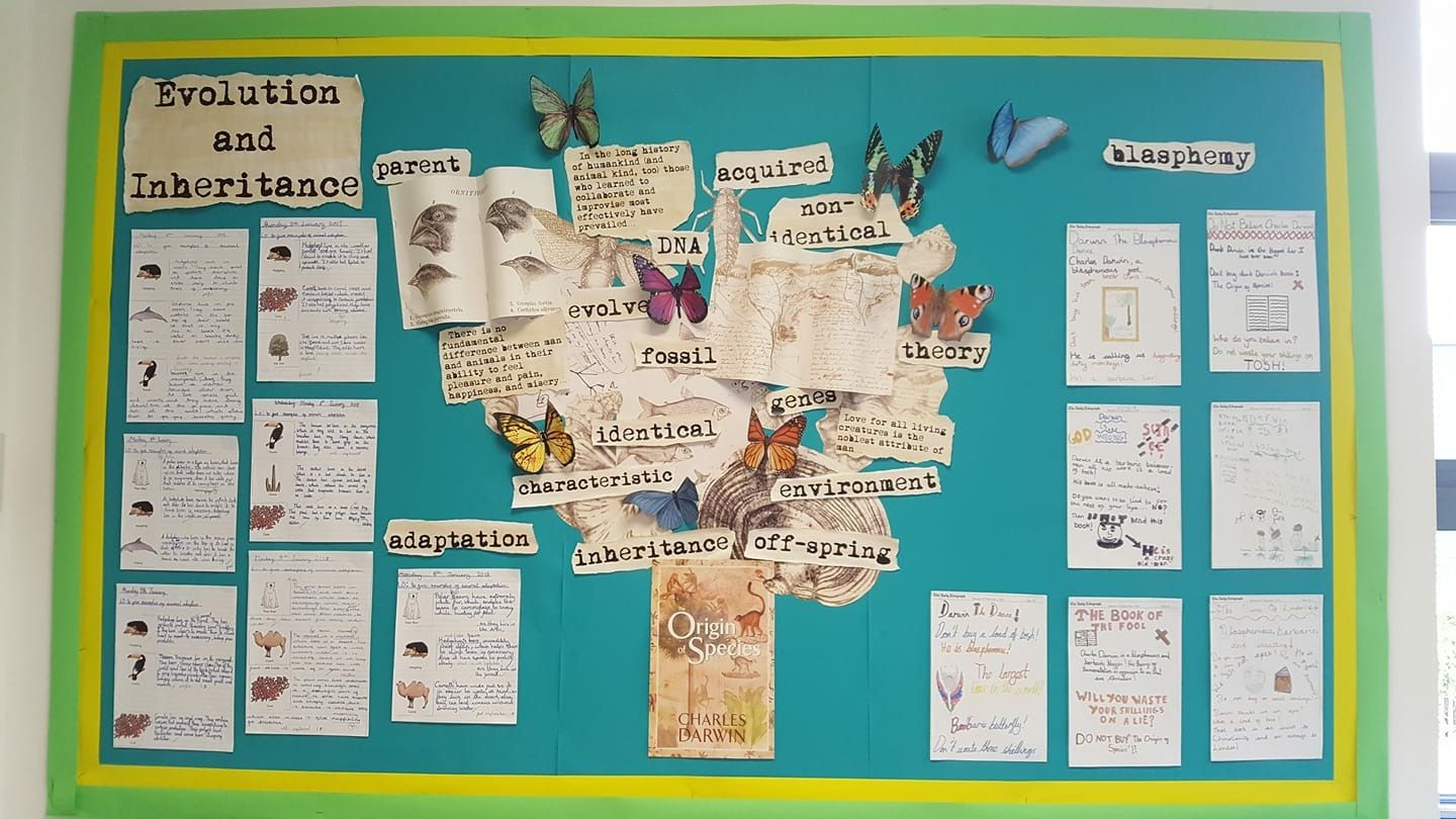 Pin By Kerry Webster On Ks2 Science Display Ks2 Display Best Non Fiction Books [ 810 x 1440 Pixel ]