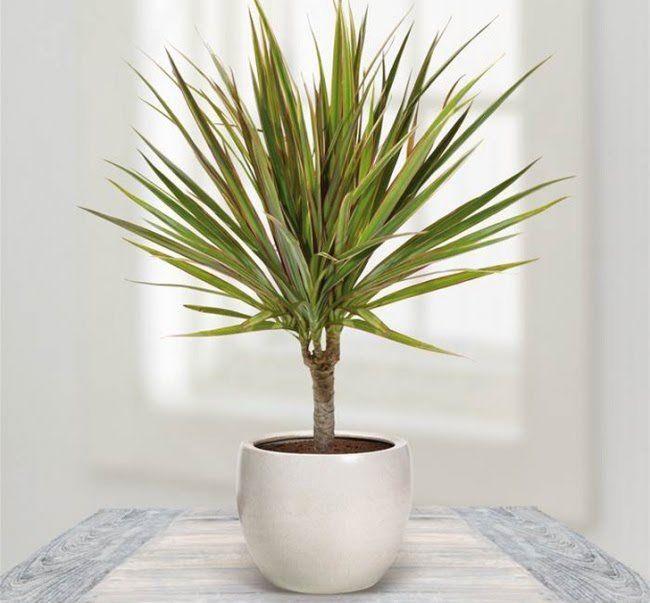 12 plantes qui peuvent survivre m me dans le coin le plus sombre salle de bain plante - Plante salle de bain sombre ...