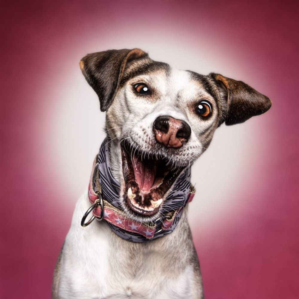Funny Dog Face Funny Dogs Funny Animals Cute Animals