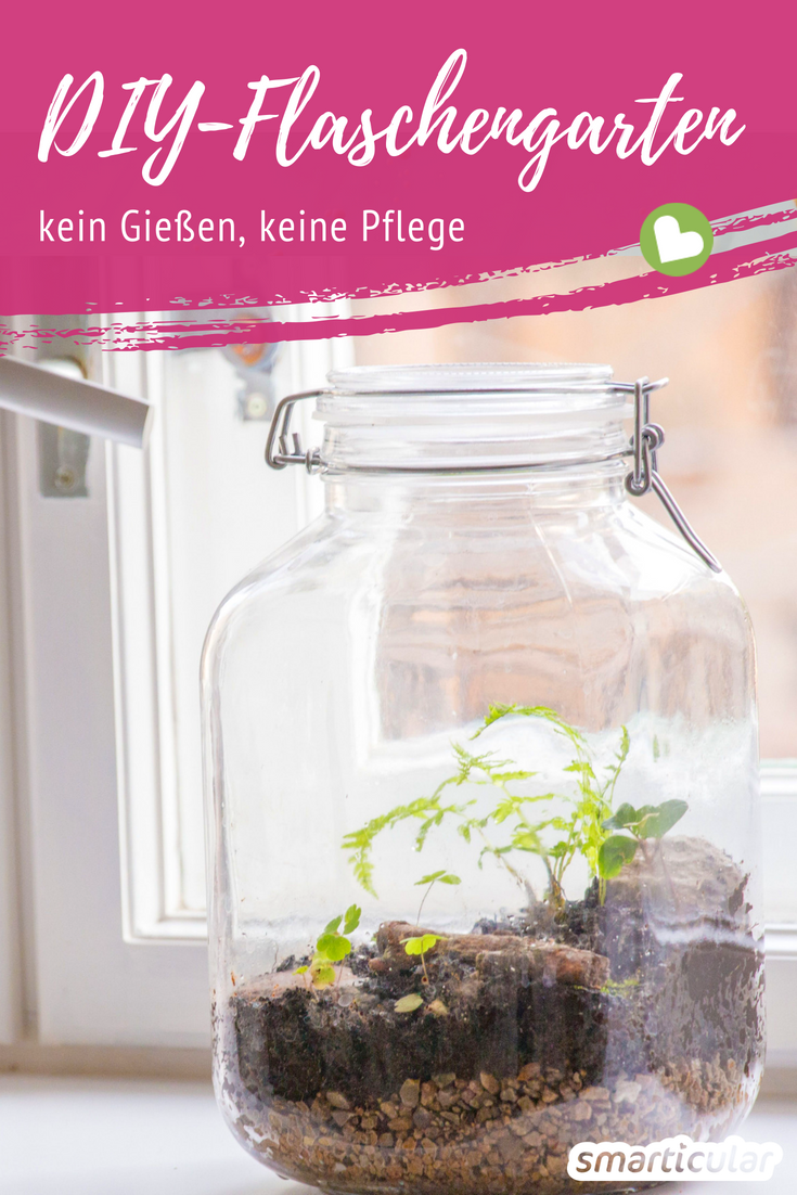 Photo of Eternal mini garden in a glass – this is how the biotope for the desk succeeds