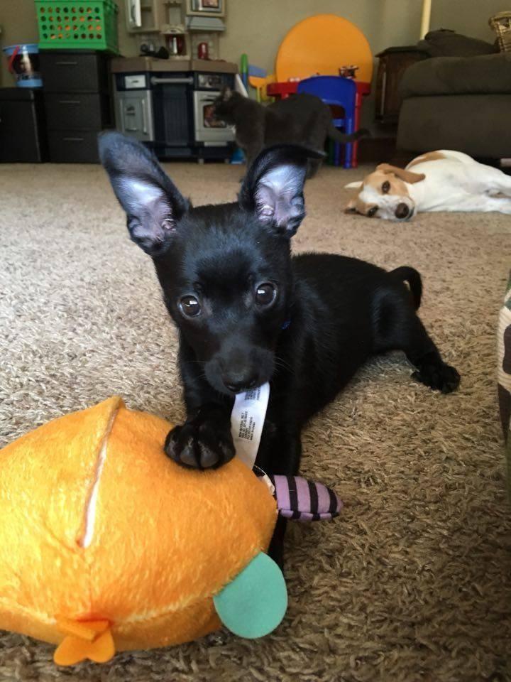 Adopt Tyson on Animals, Adoption, Pets