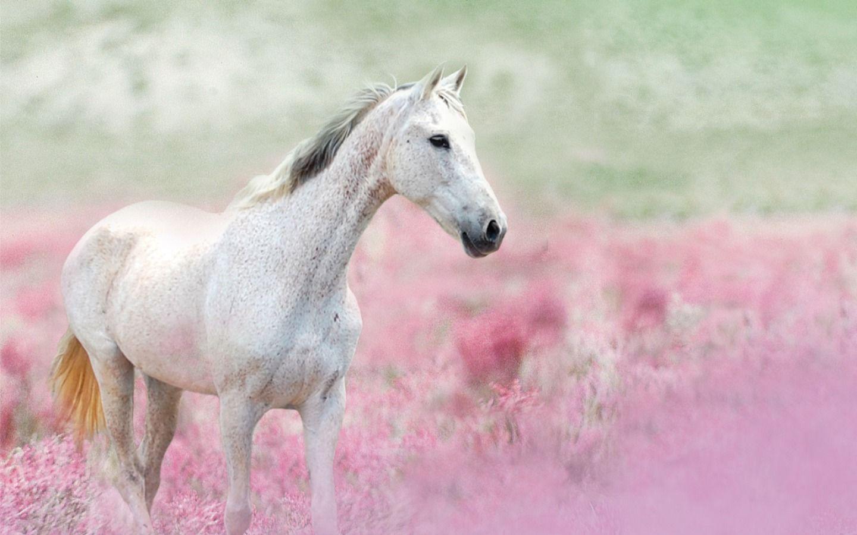 Pink Wonder Desktop Nexus Wallpapers Horse Wallpaper Horses Pretty Horses