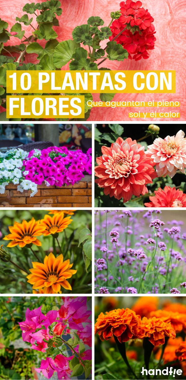 Plantas de verano con flores. ¿Cuáles resisten el sol y el calor?