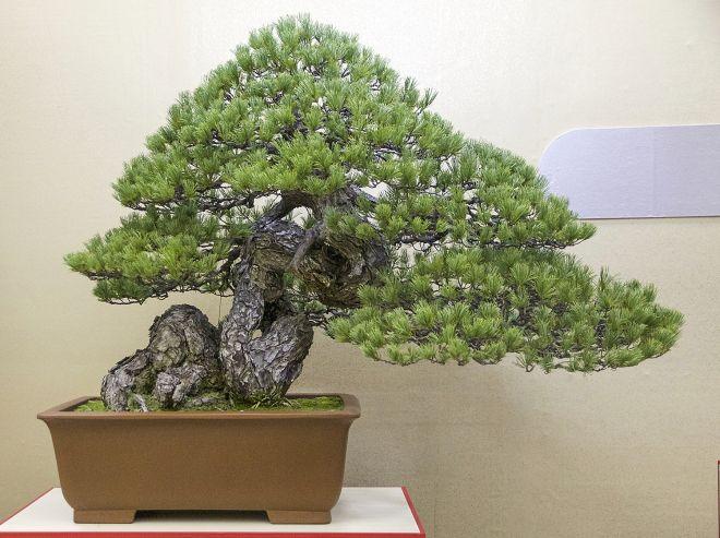 29 arbres bonsas arbre dintrieur bonsa culture de plantes lits de