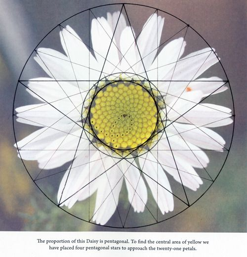 Pin By Hannah Terry On Ink Geometric Nature Geometry In Nature Sacred Geometry