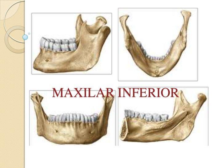 mandíbula | Anatomía: Cráneo / Skull Anatomy | Pinterest | Anatomía