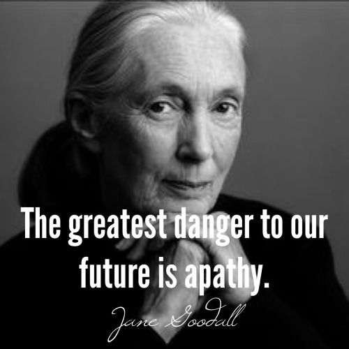 Jane Goodall Quotes Awesome Image Result For Jane Goodall Quotes  Quotes  Pinterest  Jane