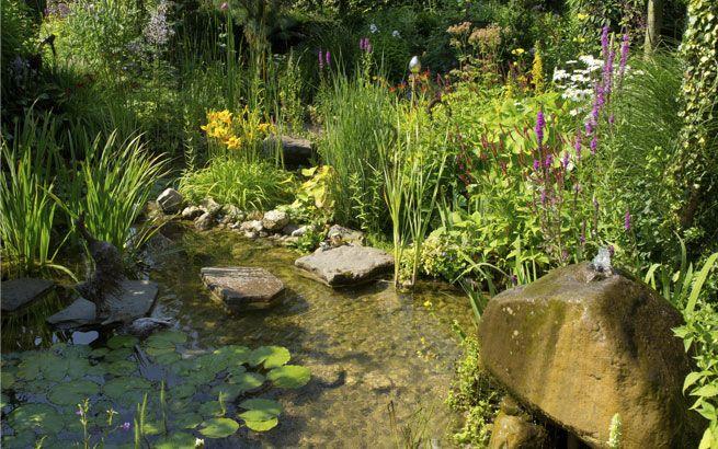 Biotop im Garten anlegen: Umfassende Tipps für das Natur-Gewässer #poolimgartenideen