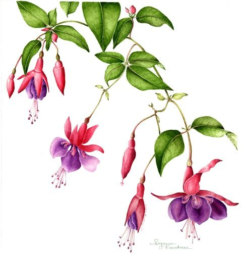 Page Not Found Flower Art Flower Drawing Botanical Painting
