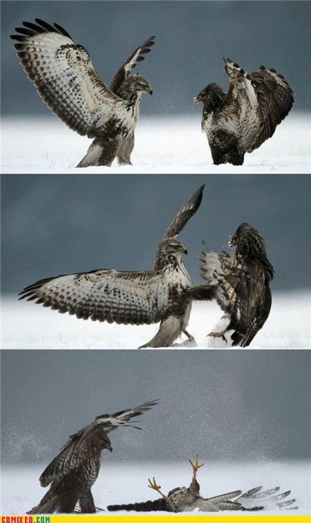 This Is Sparta Scary Birds Animal Captions Pet Birds