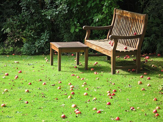 Apples on a garden bench