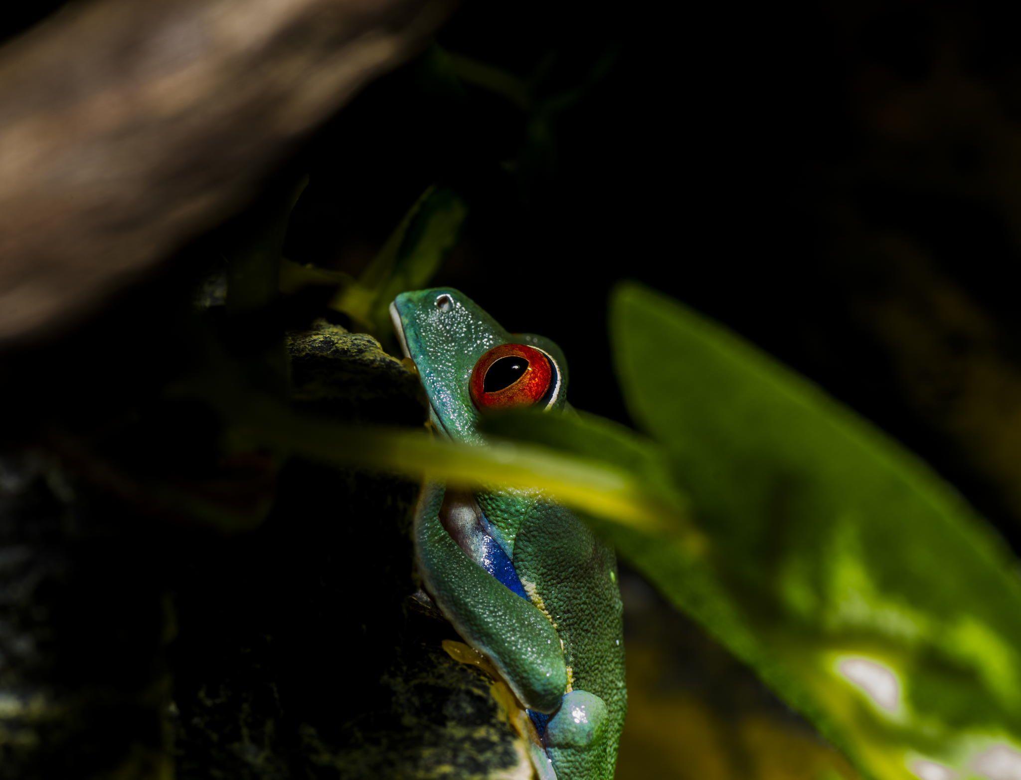 tree snail rainforest