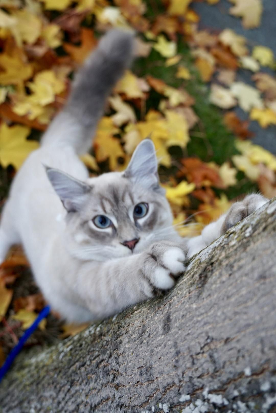 I Had The Most Adorable Model For A Fall Photo Shoot Cat