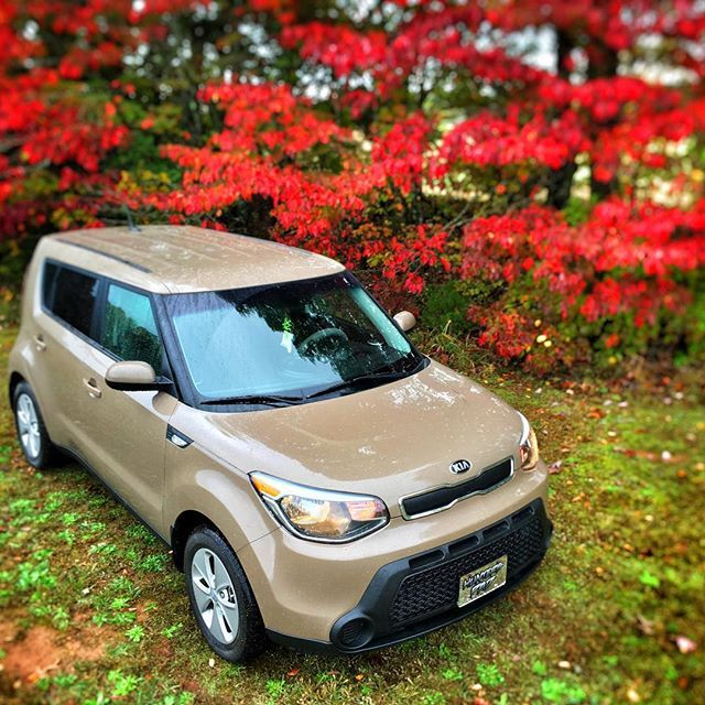 Love Is In Bloom With Latte Soul And Pretty Red Flowers Kia Kia Soul Ford Flex