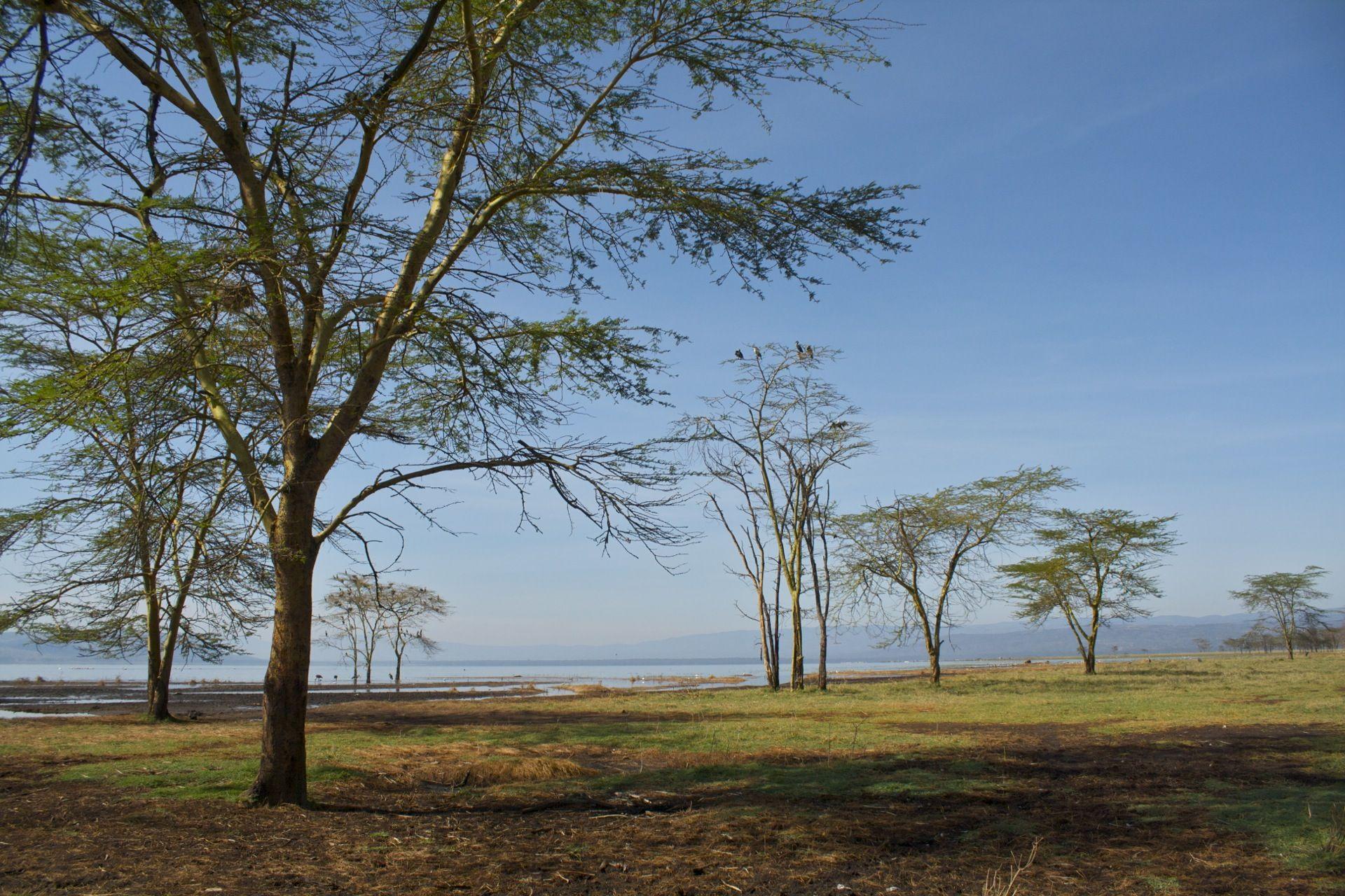 Nakuru Lake, #Nakuru, #Kenya #wikoftheday Want to visit Kenya? http://bit.ly/VTZDZI