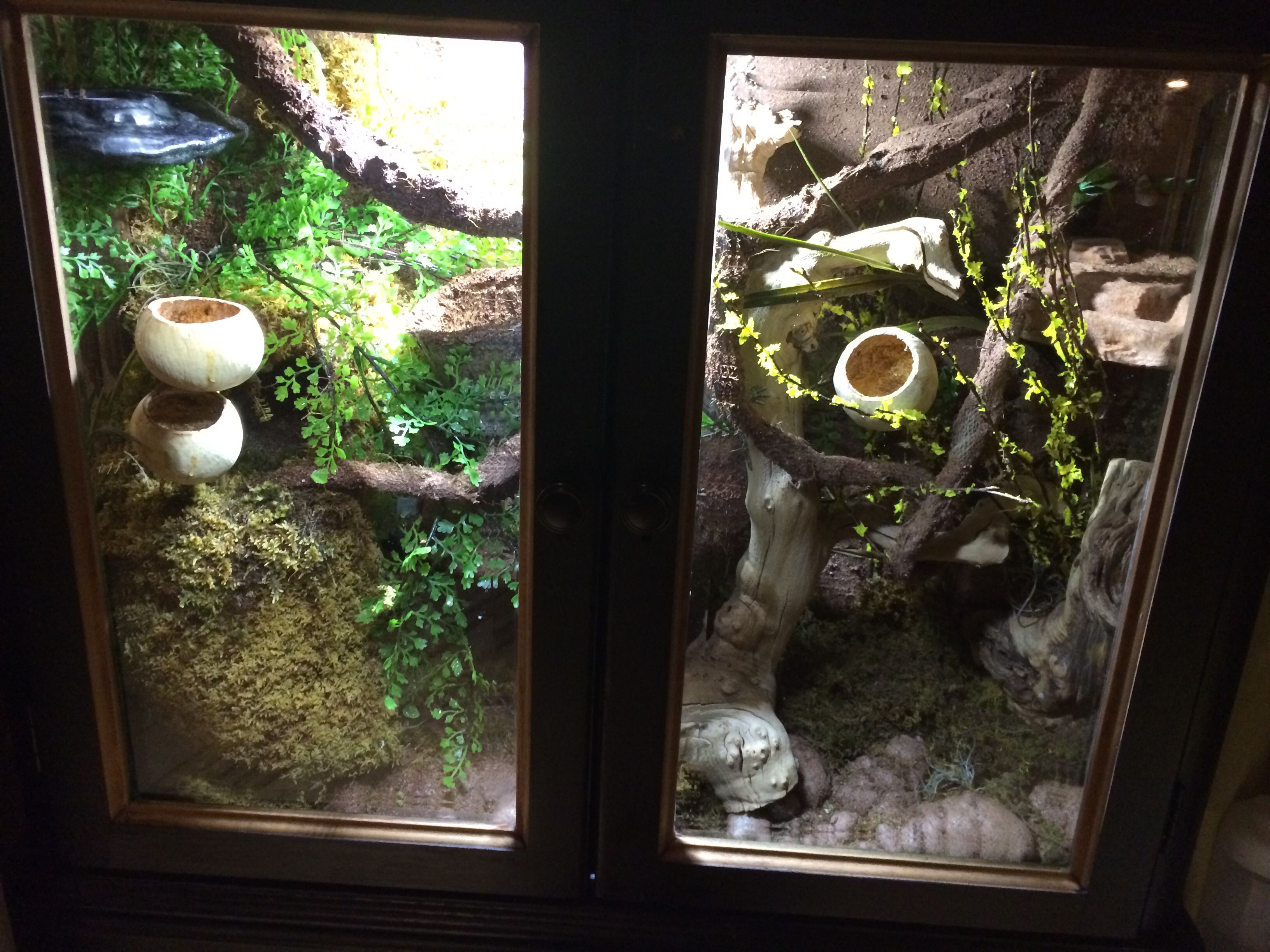 terrarium furniture. DIY Reptile Furniture Cage, This One Is For My Leachie Gecko That I Made Out Terrarium -