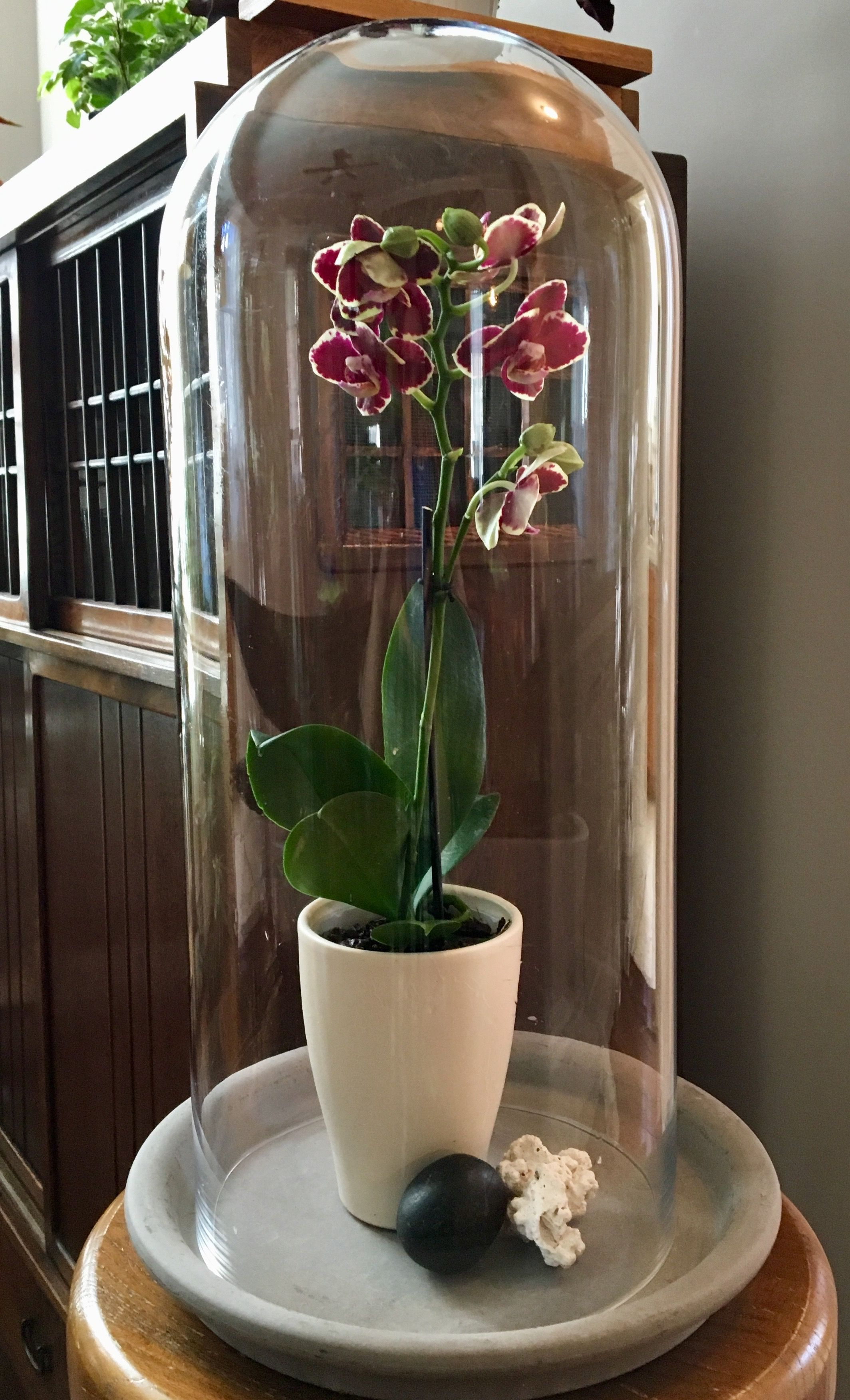 Orchid Under Cloche Orchid Flowers Last For Months Under A Cloche Created By Floraphile Garden Design Orchid Flower Garden Design Orchids