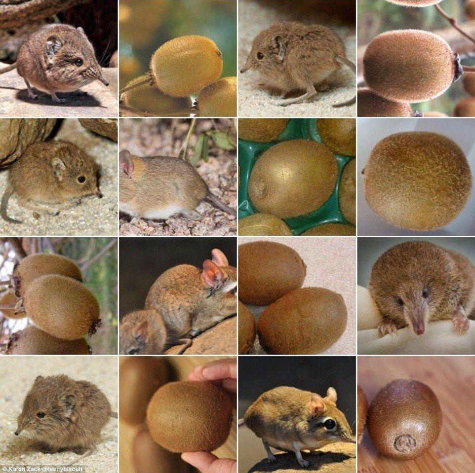 8611f8562ab5014c94463ed6c2dfa7e8 shrew or kiwi? before her dog and food photos went viral, karen