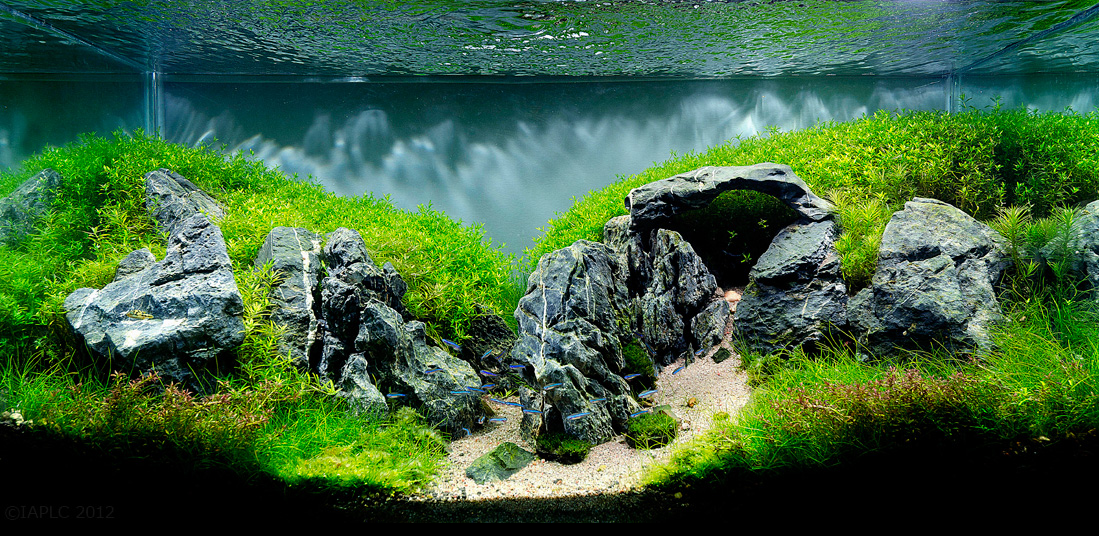 Freshwater Aquascape With Stonehenge Rocks