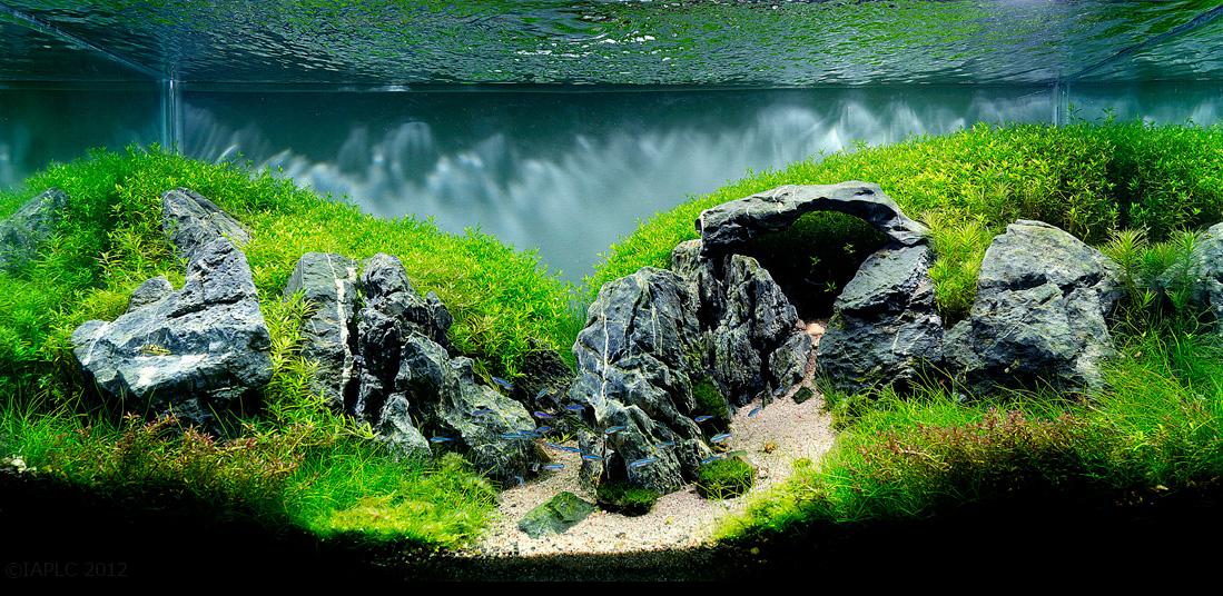 Beau Freshwater Aquascape With Stonehenge Rocks