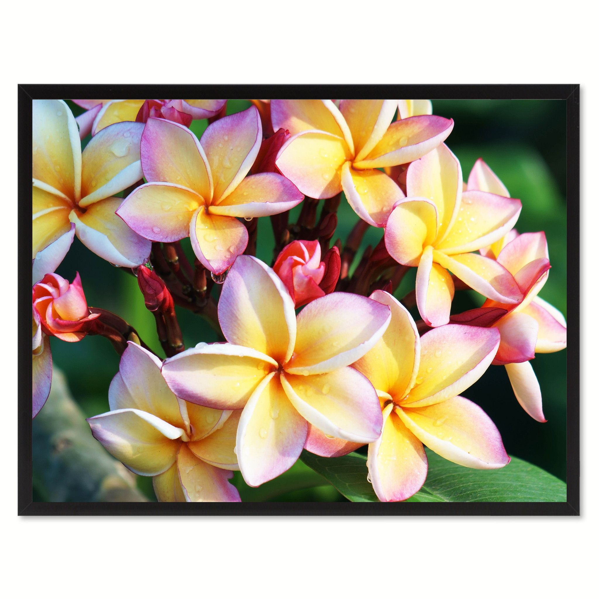 Plumeria Flower Framed Canvas Print Home Décor Wall Art | Framed ...