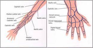 arm vein map - Google Search | Career | Pinterest Vein Map on deformation mechanism map, stem map, eye map, iris map, vascular map, arteries map, taste bud map, muscle map, venous map, lung map, spine map, nerve map, growing map, artery map, spinal cord map, context map, noise map, node map, carotid map, brain map,