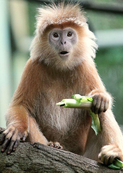 Prabu Dennaga In 2020 With Images Animals Funny Animals Animals Beautiful