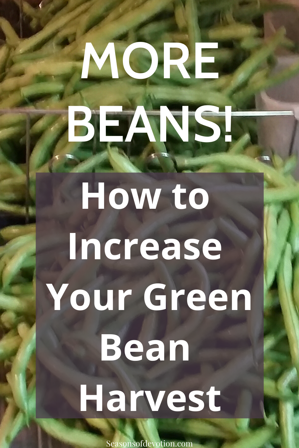 How to Increase Your Green Bean Harvest