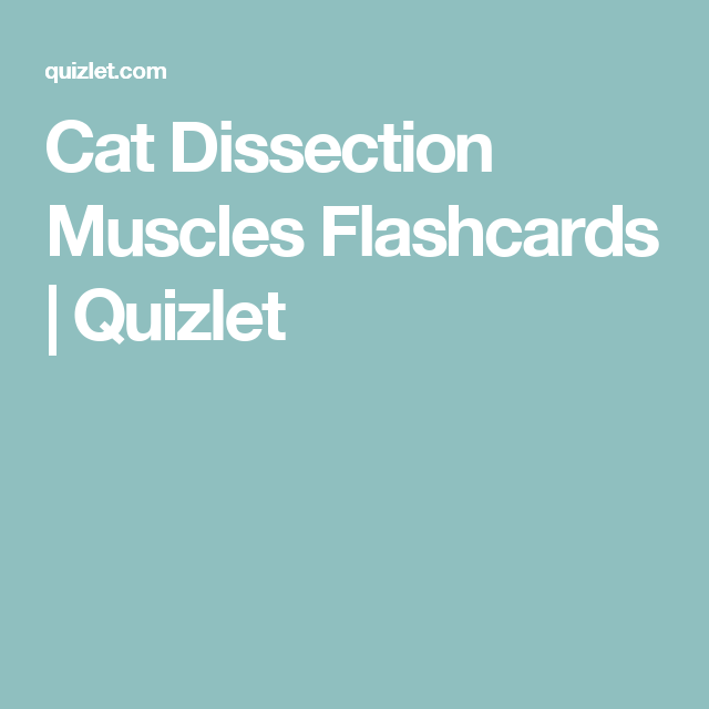 Cat Dissection Muscles Flashcards | Quizlet | Anatomy | Pinterest
