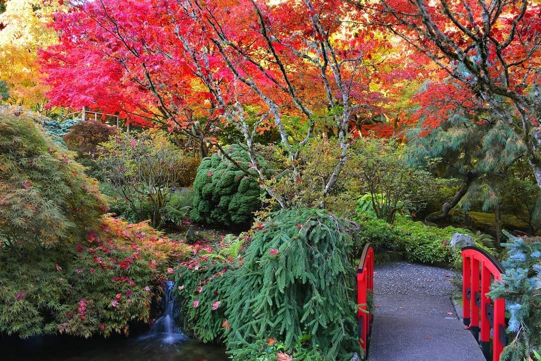 In our Stories now: The ultimate guide The Butchart Gardens in the fall  In our Stories now: The ultimate guide The Butchart Gardens in the fall #butchartgardens