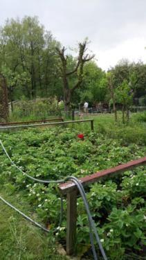 Garten Pachtgarten In Der Alten Weide In Kiel Mettenhof Grundstuck Garten Zur Miete Pacht Ebay Kleinanzeige Ebay Kleinanzeigen Garten Kleinanzeigen
