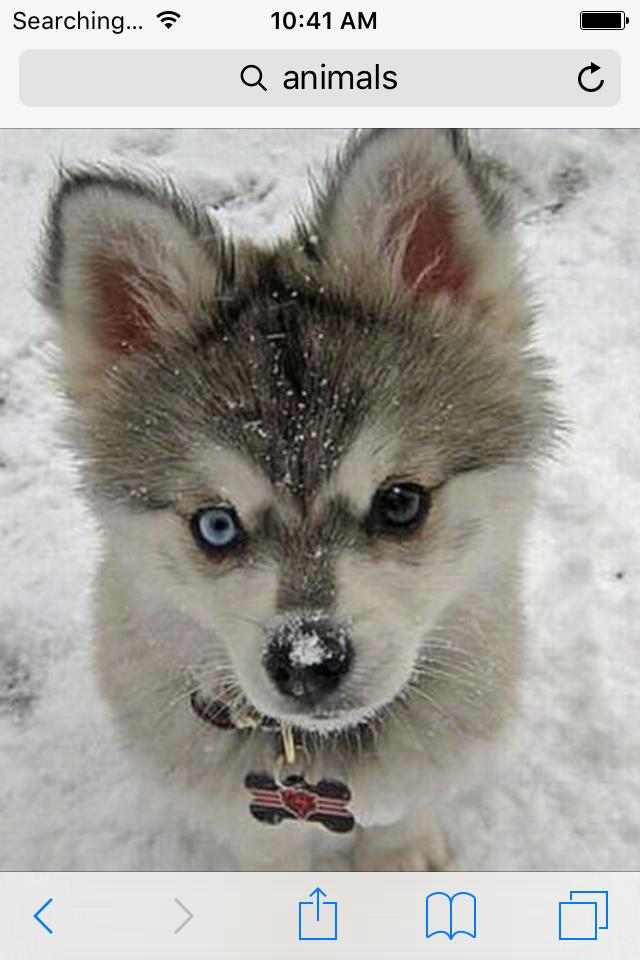 Cutest Husky Ever Cute Animals Cute Baby Animals Animals
