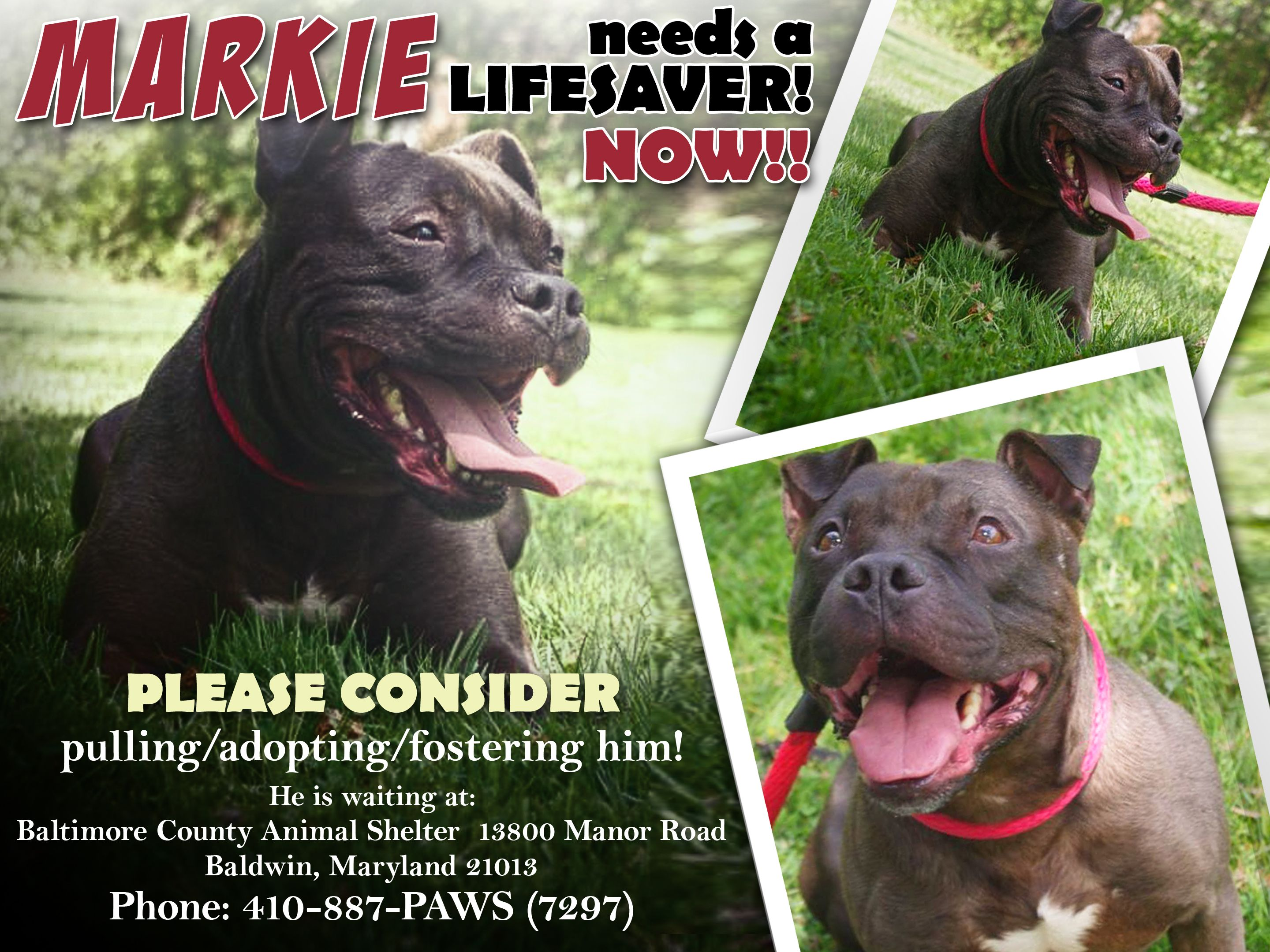 In Baltimore, MD MARKIE IS NEXT ON THE LIST TO BE GONE