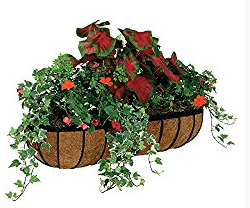 Wire Wall Planter Wall Planters Outdoor Plants For Hanging