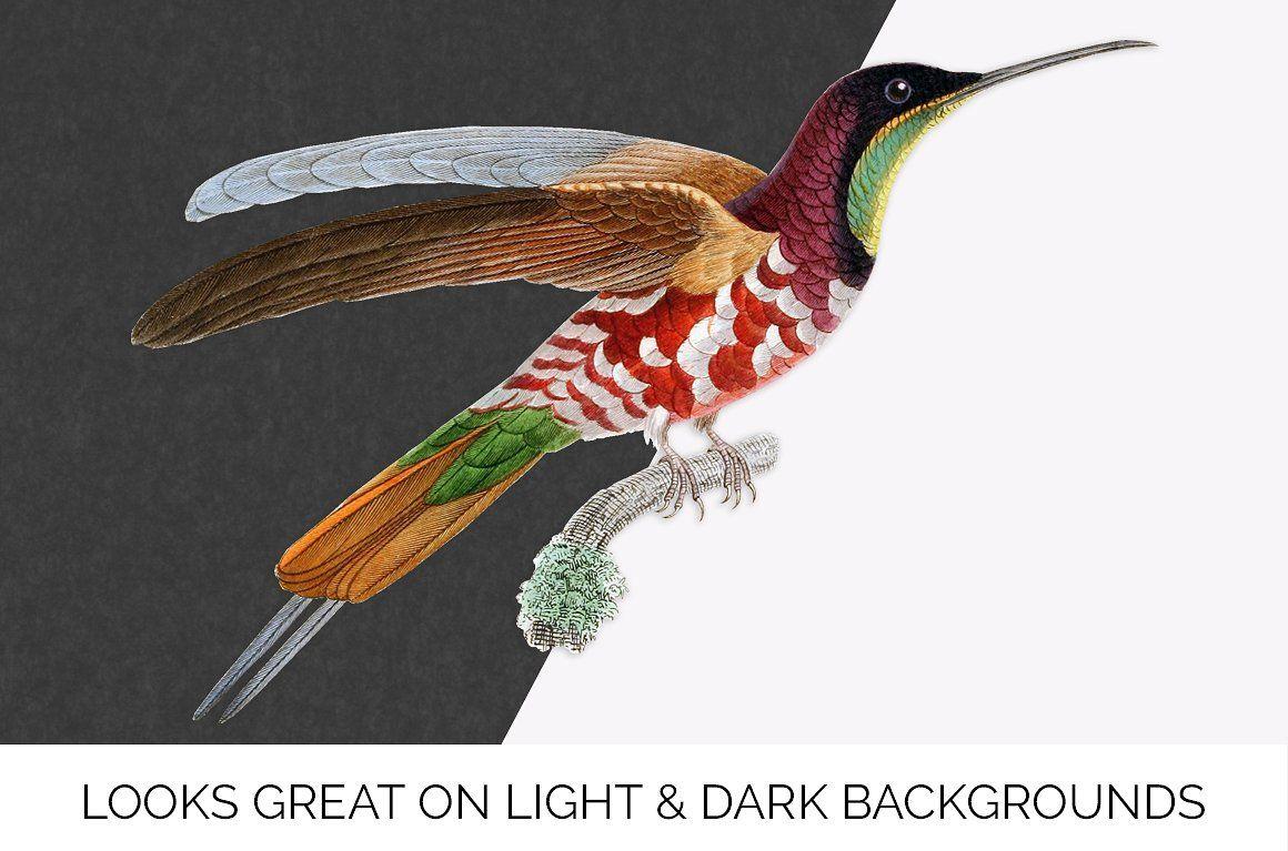 Vintage Hummingbirds Bundle (20) Flying bird silhouette