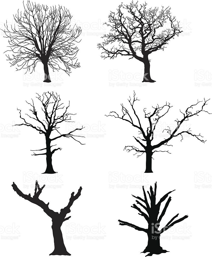 Dead Tree Vector Illustration Dead Tree Tattoo Tree Drawings Pencil Tree Drawing