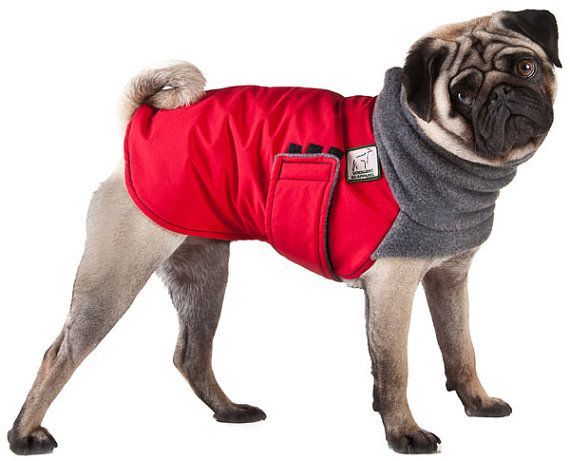 Pug Winter Dog Coat Winter Coat Dog Clothing Pug Clothes Pug