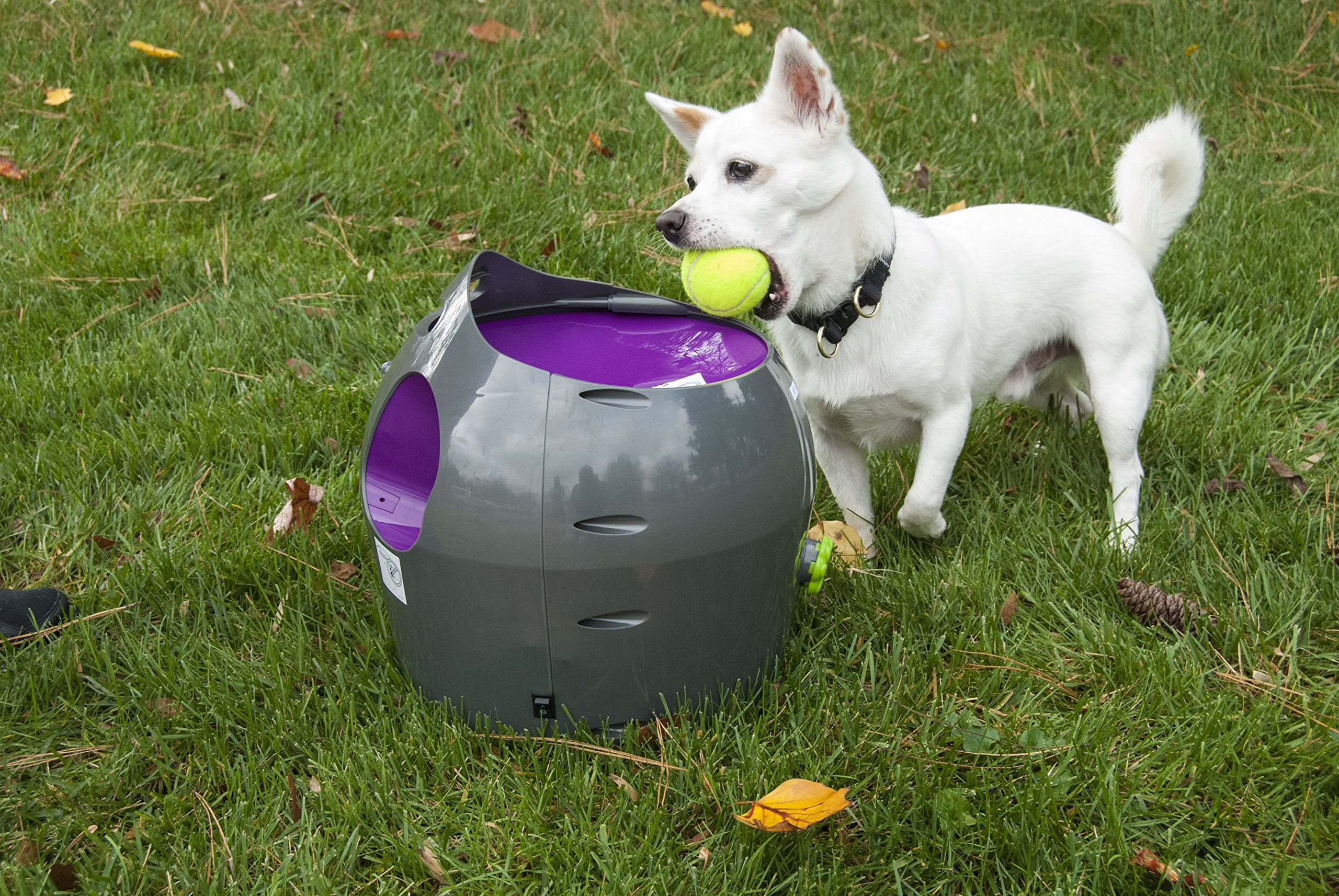 Petsafe Busy Buddy Automatic Ball Launcher Amazon Co Uk Pet
