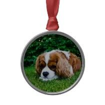 Cavalier King Charles Spaniel Blenheim in Grass Christmas Tree Ornament by wallarts