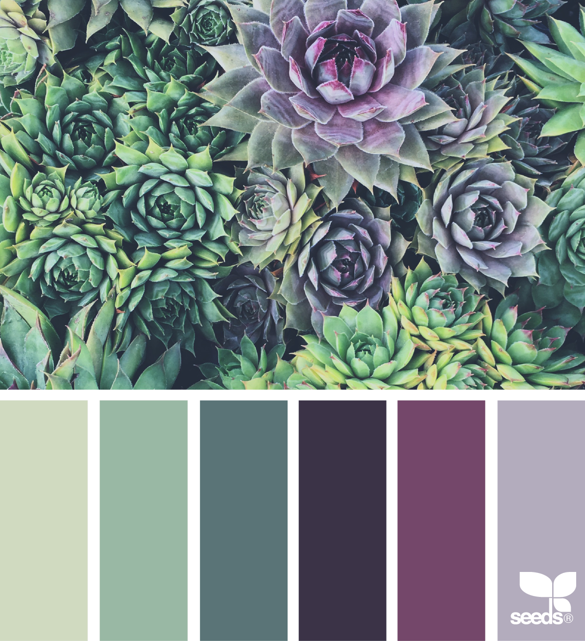 Green Wall Color Scheme And Purple Beds In Small Teenage: Succulent Hues