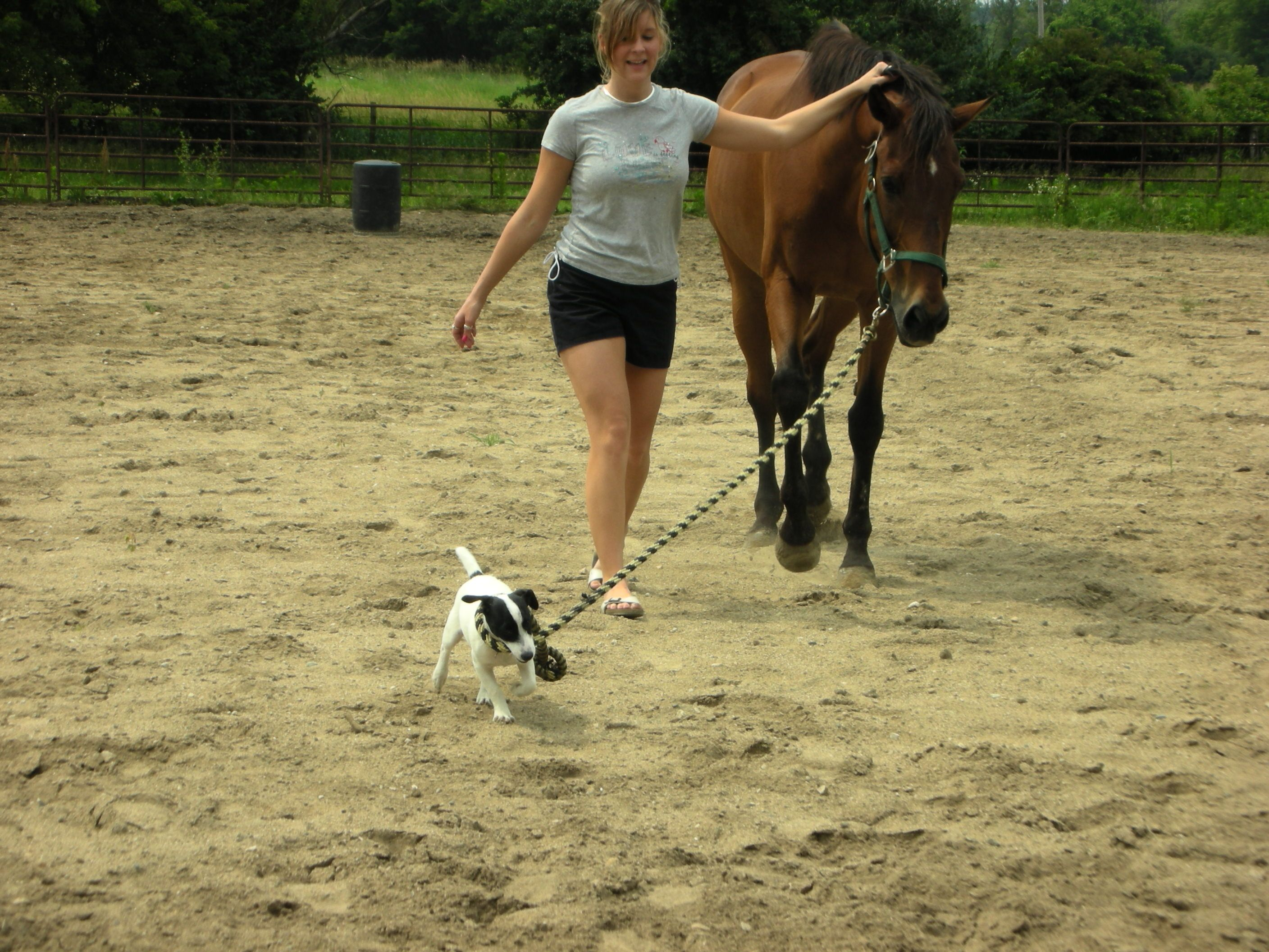 top ideas about horses trail riding jack o top 25 ideas about horses trail riding jack o connell and jack russells