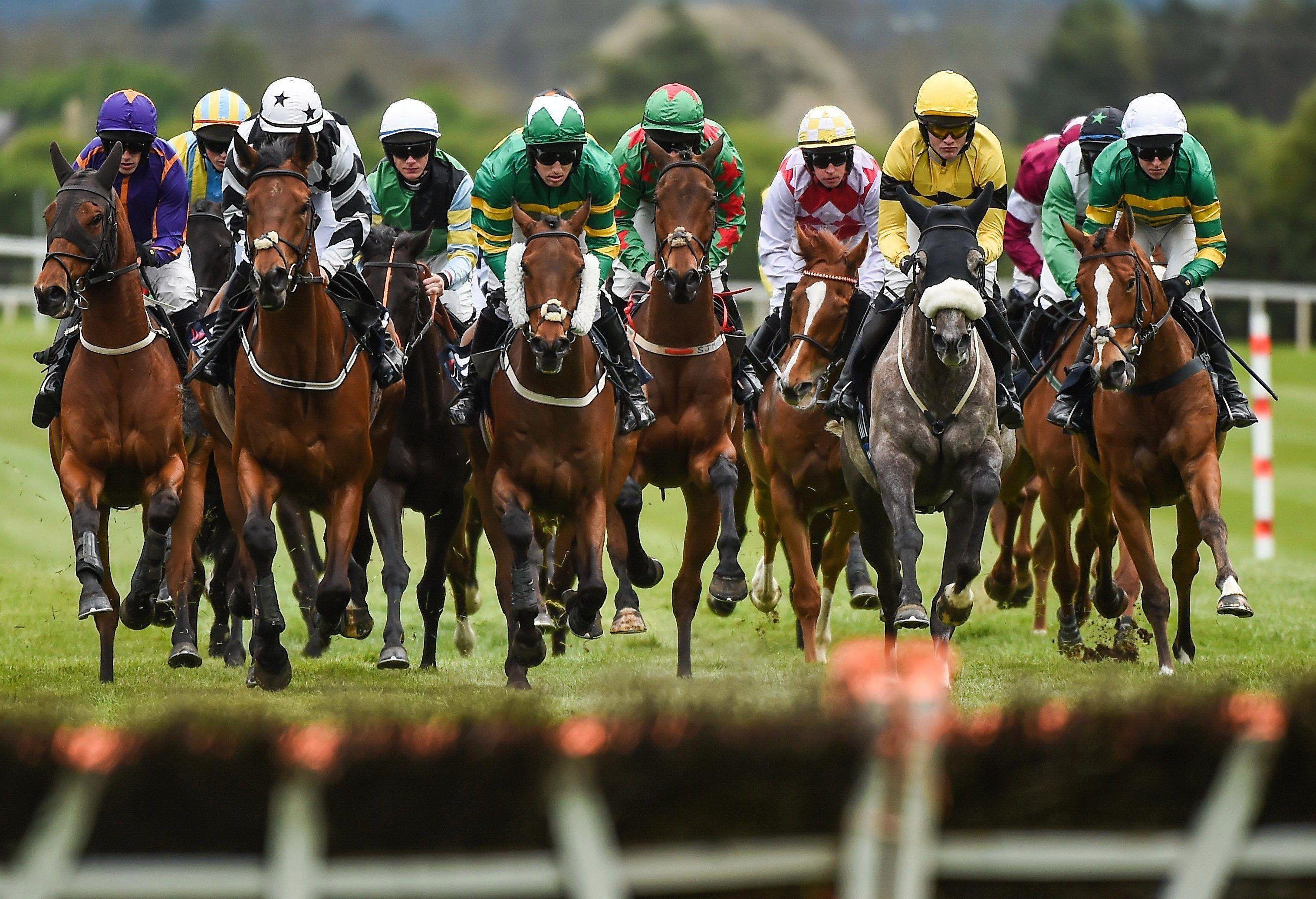 Horse Racing Live Stream