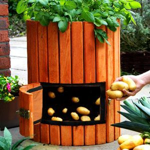 Grow 100 Pounds of Potatoes In a Barrel. Potato barrels aren't sold outside the UK  yet.