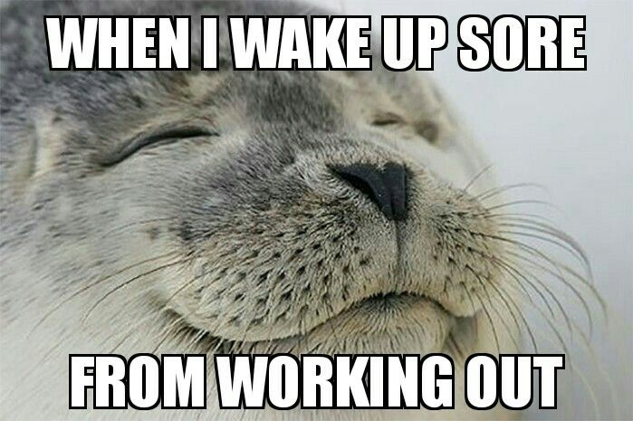 Waking Up Sore From Working Out Means Success Workhardgymharder Gymrat Super Funny Funny Pictures Humor
