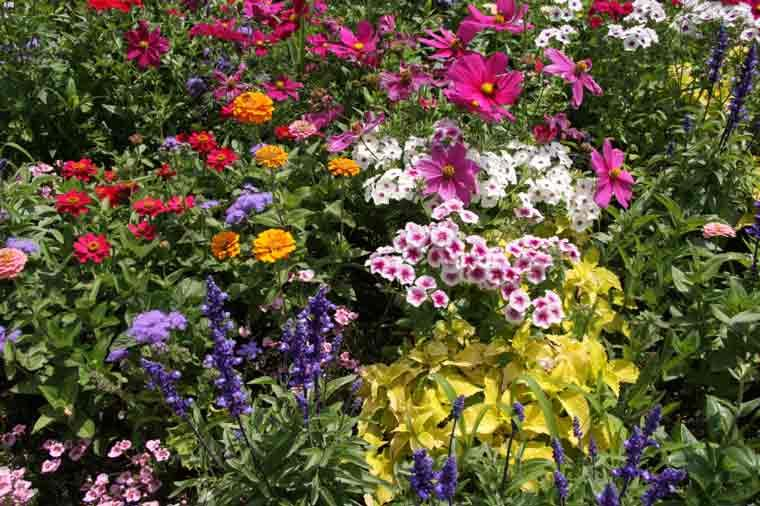 Perennial garden ideas choosing and planting perennials perennial perennial garden ideas choosing and planting perennials perennial flowers duluth garden mightylinksfo