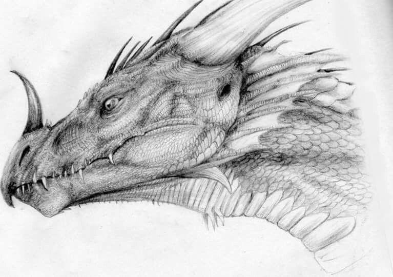 фото эскизы картинки драконов затем они