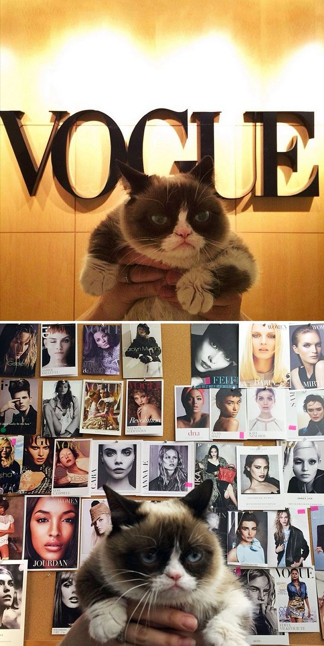 The Britlist Grumpy Cat Goes To Vogue Norm The Pug Goes Up And More Grumpy Cat Cats Cat Pics